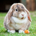 rabbit님의 프로필 사진